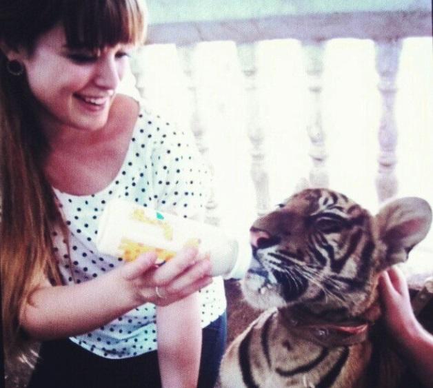 kiandra feeds tiger