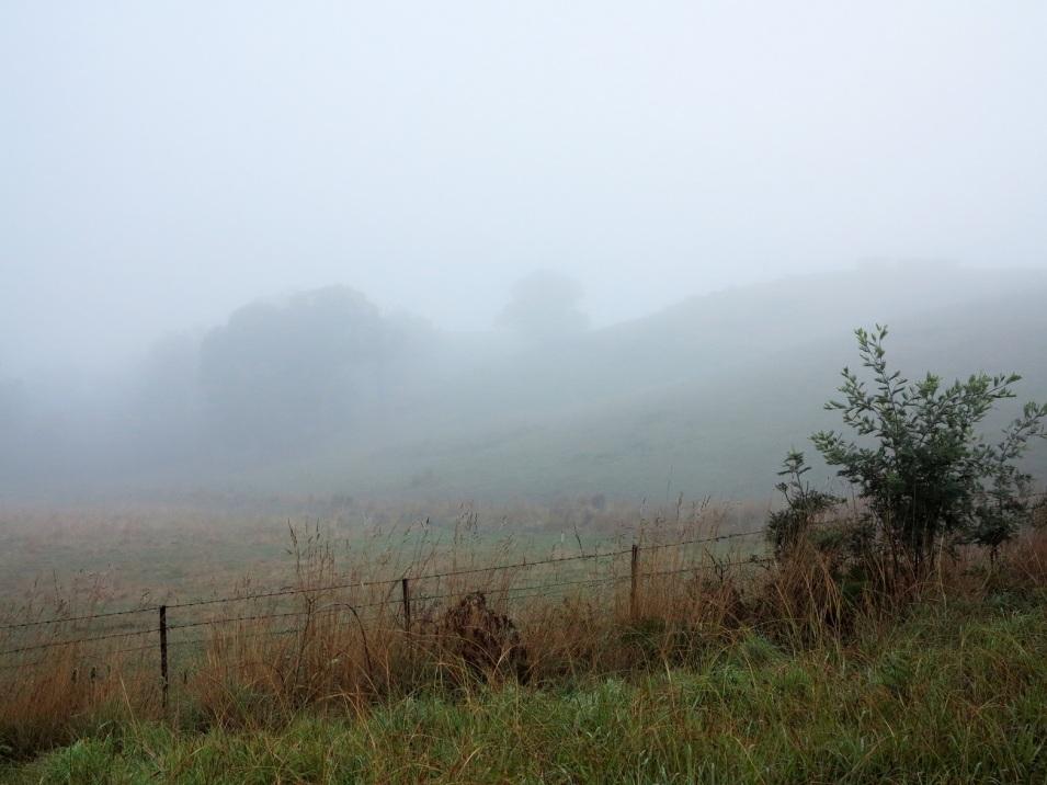 1 pea soup fog