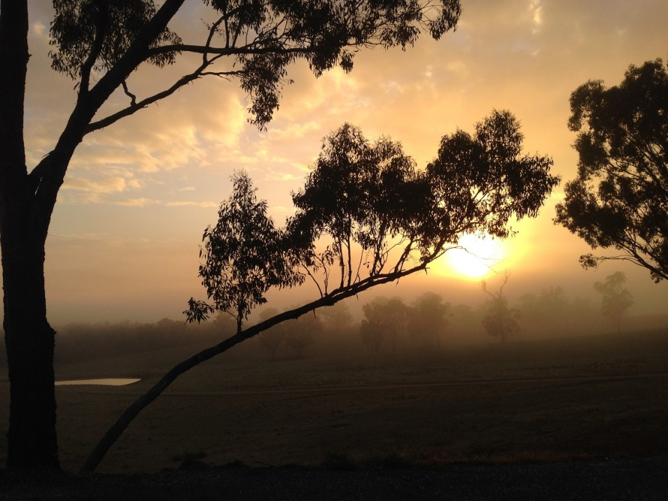 2 sunrise fog
