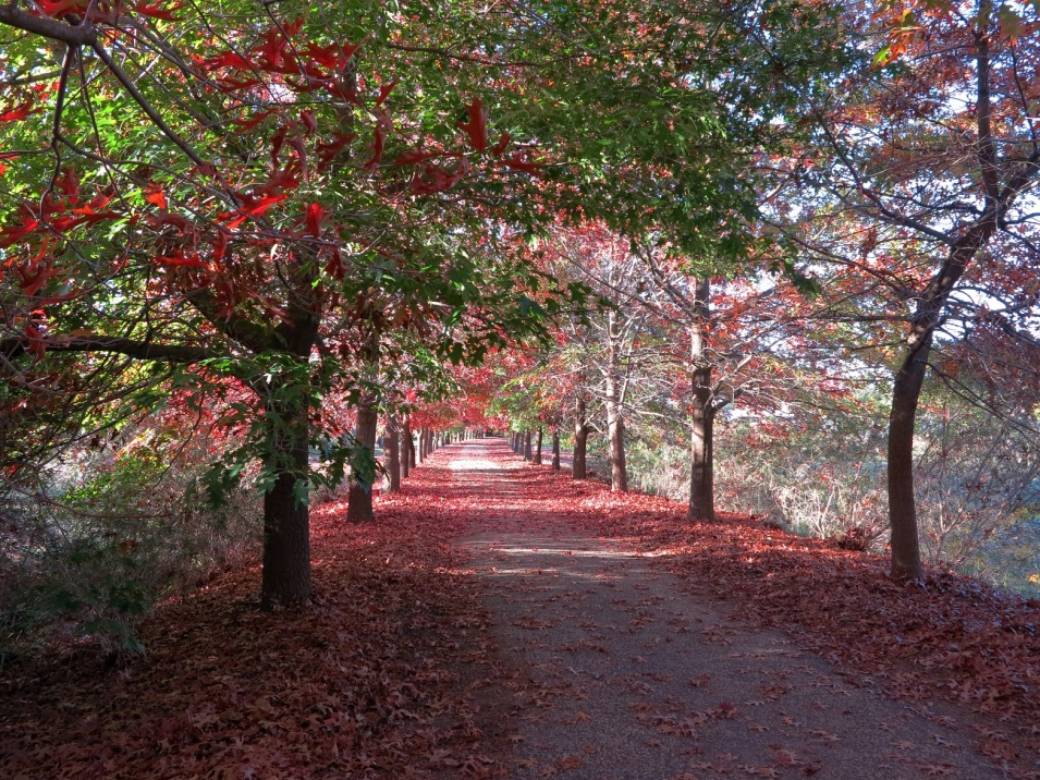autumn path2