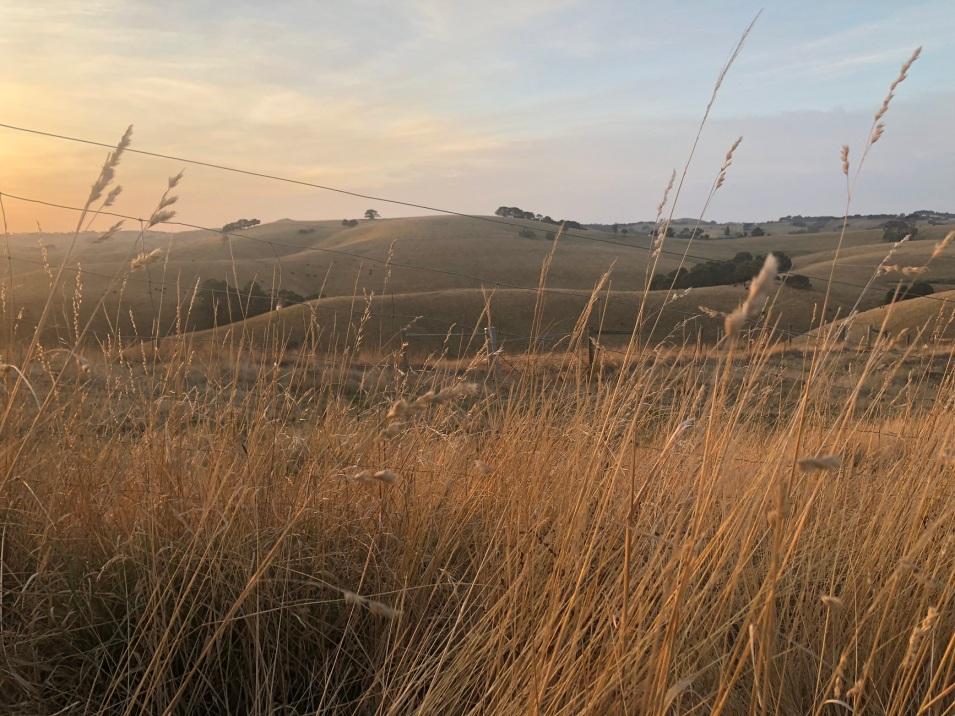 a dusk field