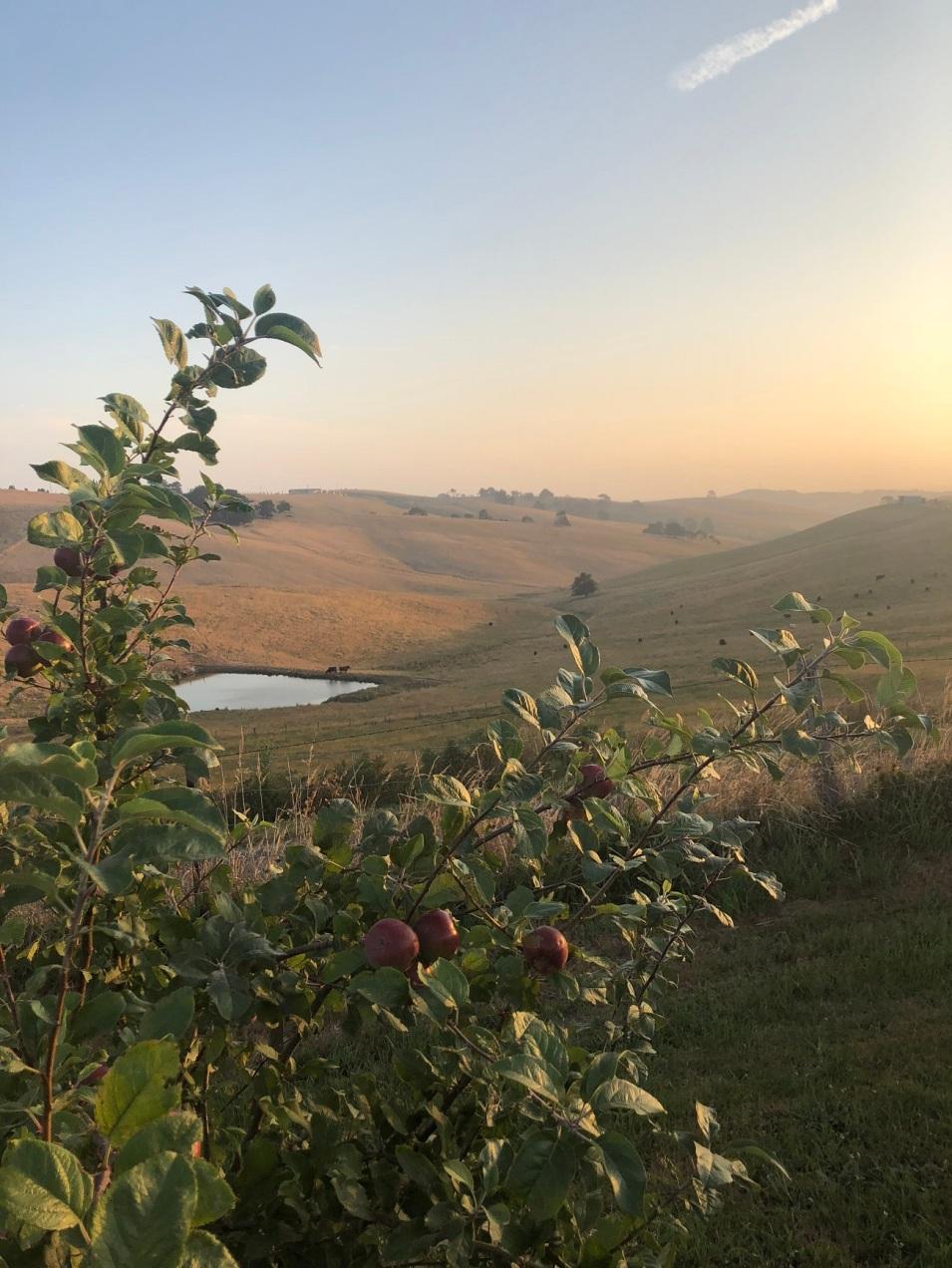 a orchard dusk